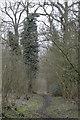 TL2850 : Buff Wood, East Hatley by Martin John Bishop
