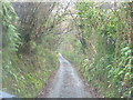 SX3157 : Narrow track down to Hessenford. by BB