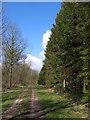 SE9465 : Track Through Cherry Wood by Stephen Horncastle