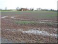 TL4972 : Grange Farm, Stretham, Cambs by Rodney Burton