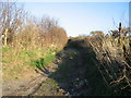 ST7161 : Track to Kilkenny Lane by Phil Williams