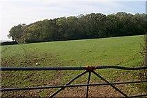 SW7852 : Caer Keif Woods by Tony Atkin