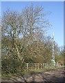 SP9131 : Mast & Tree by Rob Farrow