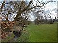 SJ7664 : Sanderson's Brook, Bradwall Green. by michael ely