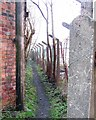 Dist:0.4km<br/>The green corridor, which the footpath follows from the River Dee, becomes a very narrow alley here.  At the far end of the alley it emerges onto a road.