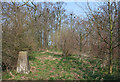 SJ6356 : Trig point in woodland by Espresso Addict