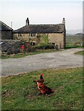 SE0022 : Cock Hill Farm by Paul Glazzard
