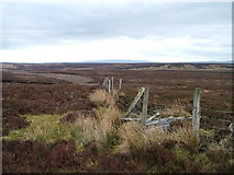 NY8815 : Boundary Fence on Great Dodd by David Brown