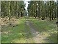 TL1140 : Track Looking SSE in Rowney Warren Wood by John Yaxley