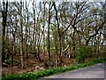 SJ6482 : Roadside woodland by Tom Pennington