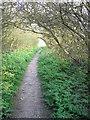 TL0421 : Footway through Blows Downs by John Yaxley