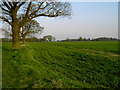 TL1318 : Looking SE Towards Hyde Home Farm by John Yaxley
