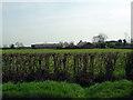 TL0957 : View towards Southfield farm by Les Harvey