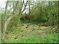 TL1072 : Pond by Les Harvey