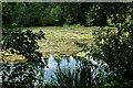TL8193 : Lynford Lakes by Adrian Perkins