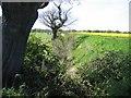 SJ4355 : Deep Ditch near Highfield Farm - Looking West by John S Turner
