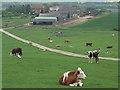 SP7314 : Decoy Farm by Andrew Smith
