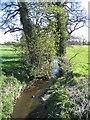 SJ4555 : Coddington Brook - South by John S Turner