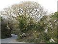 SW7230 : Oak by Bosahan Quarry by Jonathan Billinger