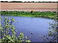 SM8532 : Geese on reservoir by ceridwen