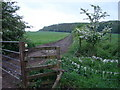 SP4609 : Footpath leading uphill towards Wytham Great Wood by Ian Paterson