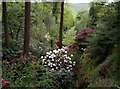 SJ9977 : Dunge Valley Gardens from head of valley. by Tom Pennington