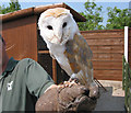 SJ7380 : Gauntlet Bird of Prey Centre, near Knutsford by Pauline Eccles