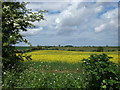 TF9237 : Norfolk countryside in spring. by Andy Peacock
