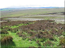 NS9027 : Backstane Hill towards M74 by Chris Wimbush