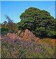 SD3888 : Late Bluebells, Gummer's How by Simon Barnes