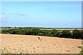 SW8437 : Looking over a ploughed field with Gerrans Bay on the horizon by Fred James