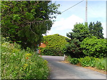 SJ6118 : The Chestnuts, Moortown by A Holmes