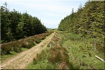 NR6014 : Forestry South of Cnoc Moy. by Steve Partridge