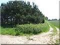 TG0721 : Track and Strip of Woodland, Jordan Green by Ian Robertson