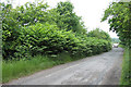 SJ9403 : Something Nasty in the Hedge, near Essington, Staffordshire by Roger  Kidd