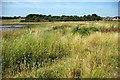 SJ7879 : Nature Reserve 2 - Town Lane by Roger Gittins