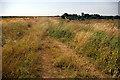 SJ7879 : Nature Reserve 4 - Town Lane by Roger Gittins