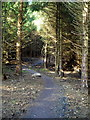 NS7183 : Cycle Trail in Carron Valley Forest by Iain Thompson