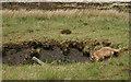 SD6719 : Trial Shaft on Darwen Moor by Mr T