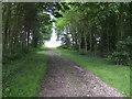 TL0260 : Track through woodland at Bourne End, Bedfordshire by Jonathan Billinger