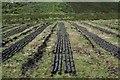 NR6117 : Peat Drying. by Steve Partridge