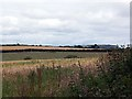 SW8635 : Looking into a field of barley with Nare Head in the distance by Fred James