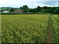 ST6362 : Footpath through wheat, Chelwood by Brian Robert Marshall