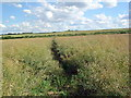 TL1373 : Path through crop by Les Harvey
