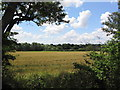 TL2477 : View south-west from Bough Lane by Tim Heaton