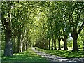 ST6173 : Avenue of trees in St George Park by Linda Bailey