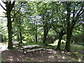 SX1960 : Picnic area in Deerpark Wood by Jonathan Billinger
