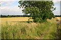 TL1251 : Bridleway to Great Barford church by Shaun Ferguson