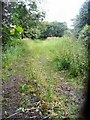SJ7968 : Lane near Twemlow Green by David C Brown