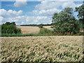 SP9650 : Wheat Fields by Richard Schmidt